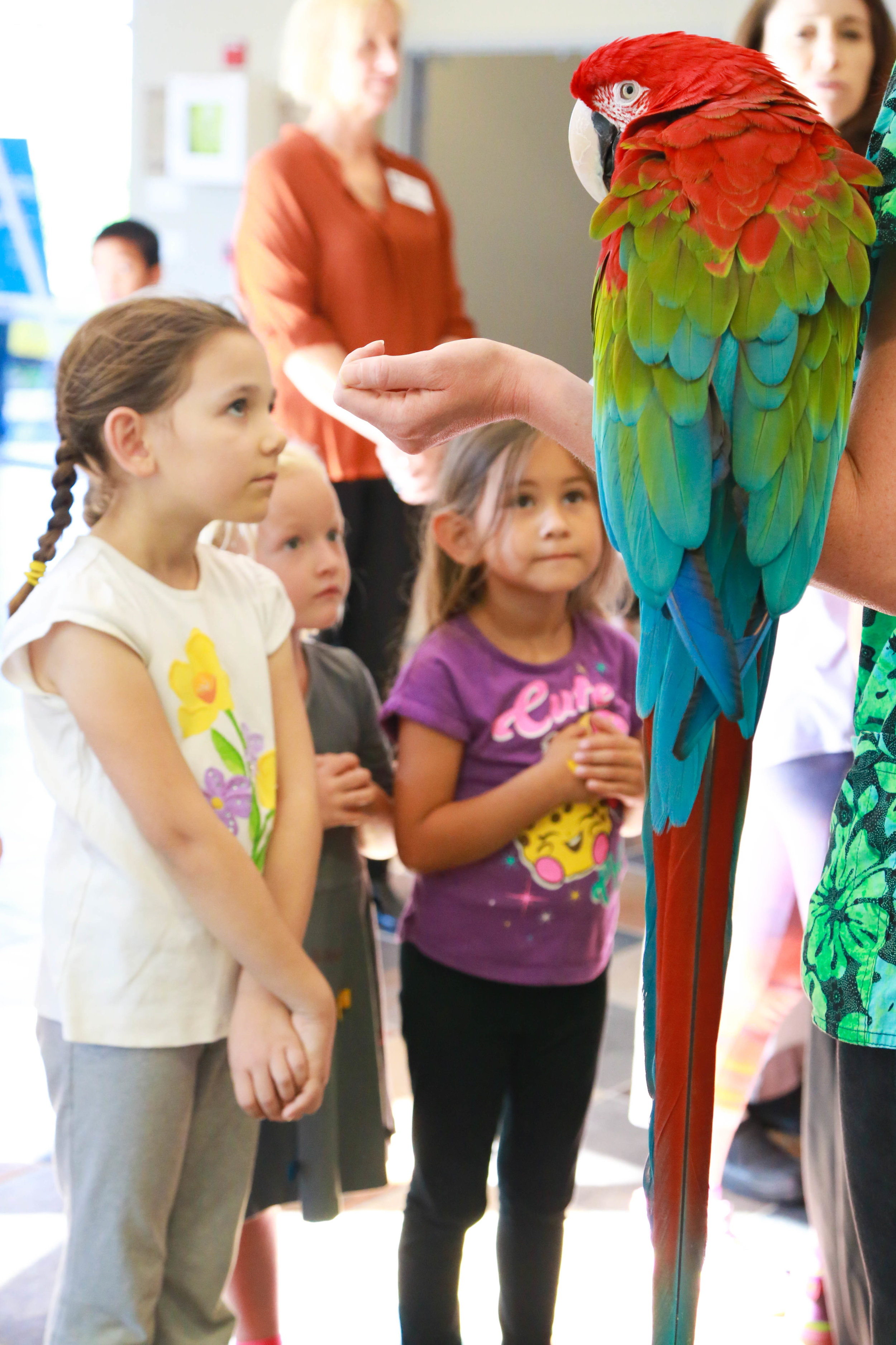 """""""Red,"""" enjoying being admired after kids heard a special tale about clever parrots [Photo: Rachel Baxter, LJCDS]"""