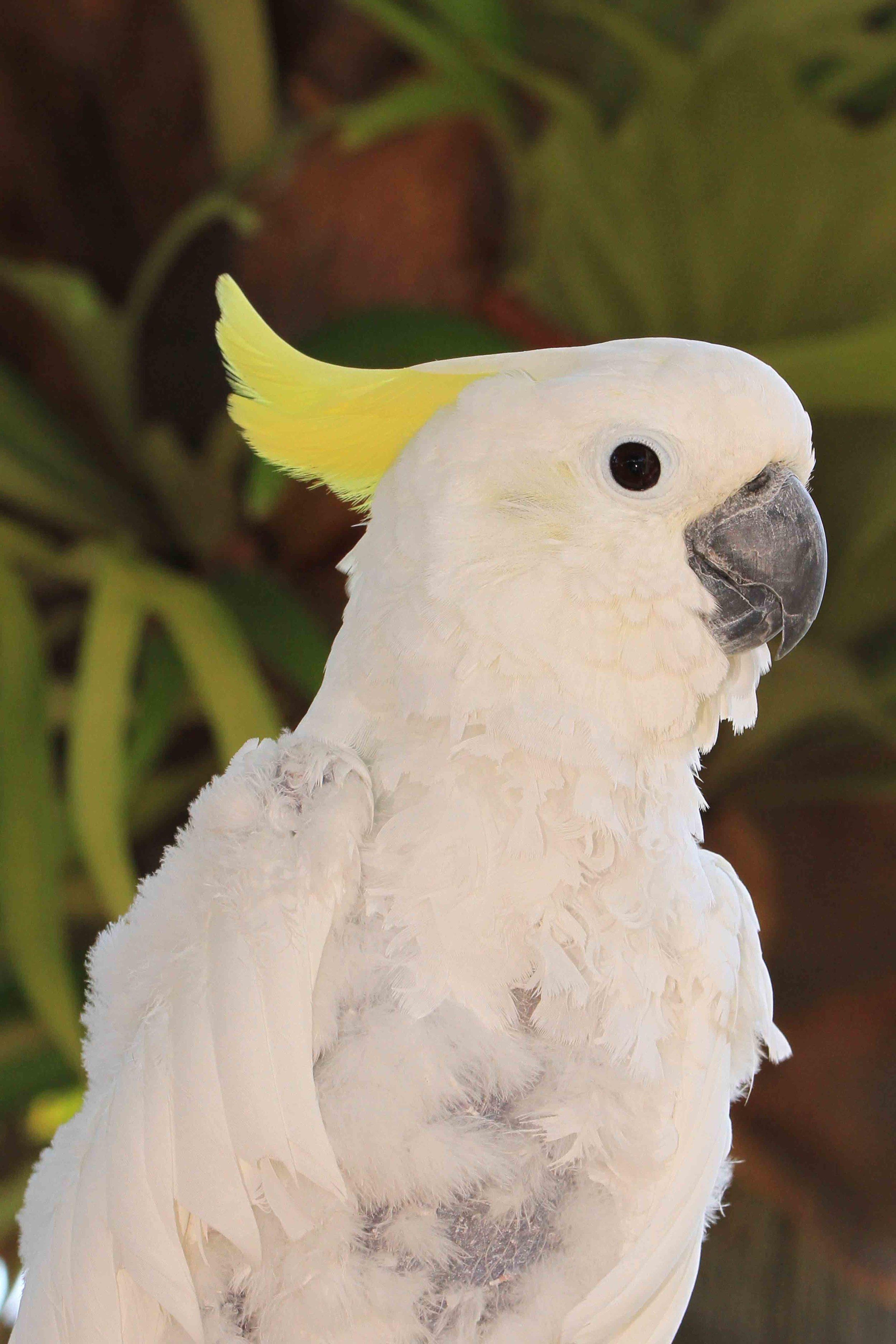 Adopt A Companion Bird | Free Flight Exotic Bird Sanctuary
