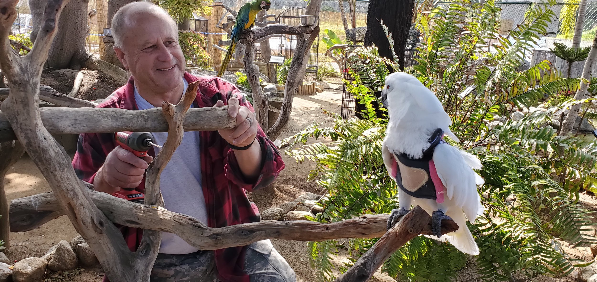 Volunteer Handyman Charlie with his favorite assistant, Casper the Umbrella Cockatoo
