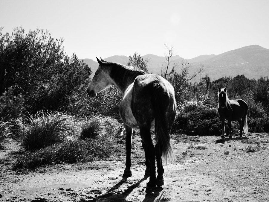 © HORSES by DELAFOI