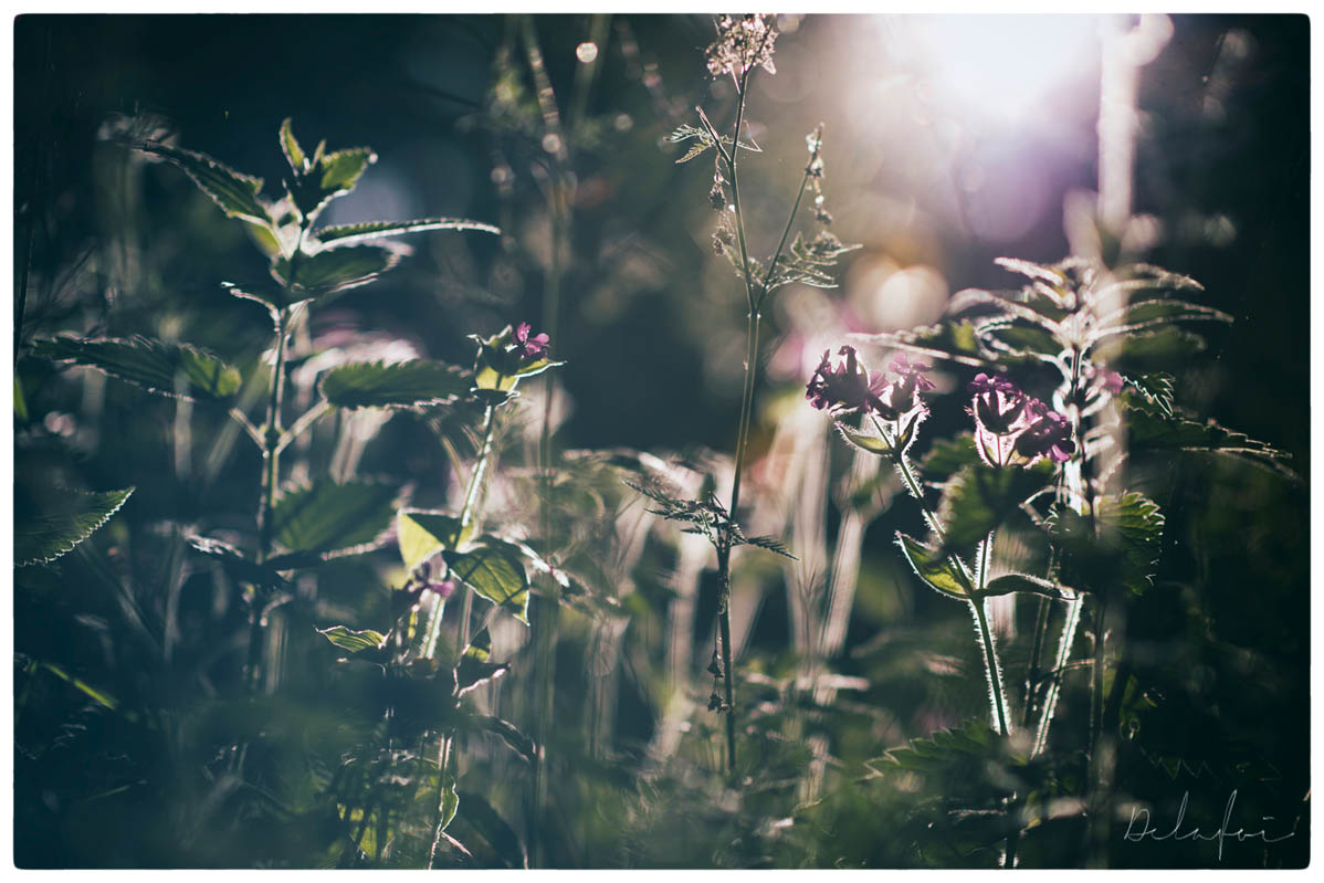 © FRIHET (ALLTID LJUS) by DELAFOI