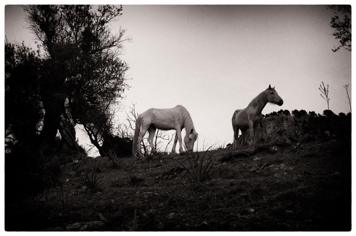 © TRIBE [Thin Wild Duke] by DELAFOI