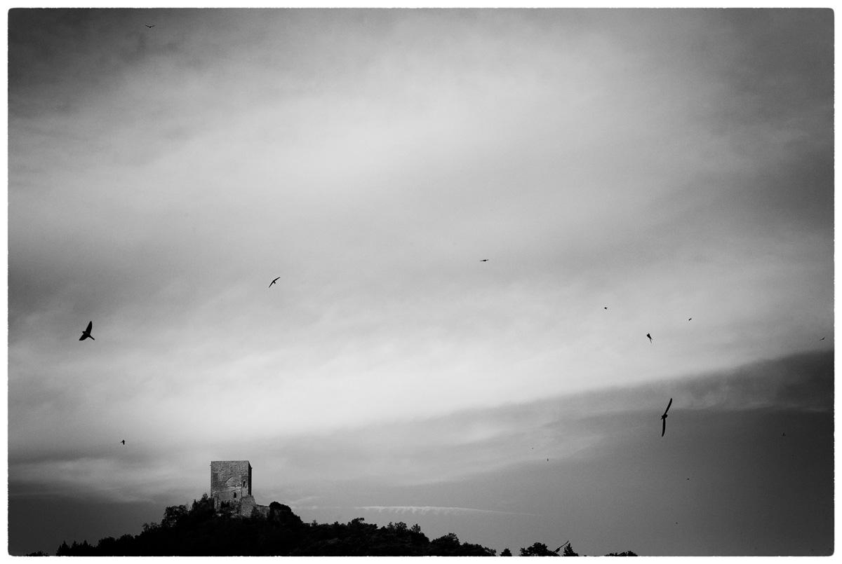 © WHERE BIRDS GO (part 4) by DELAFOI