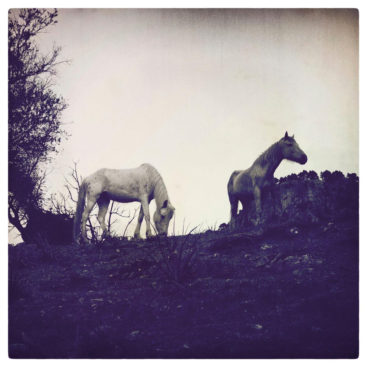 ©  THE THIN WILD DUKE  by DELAFOI