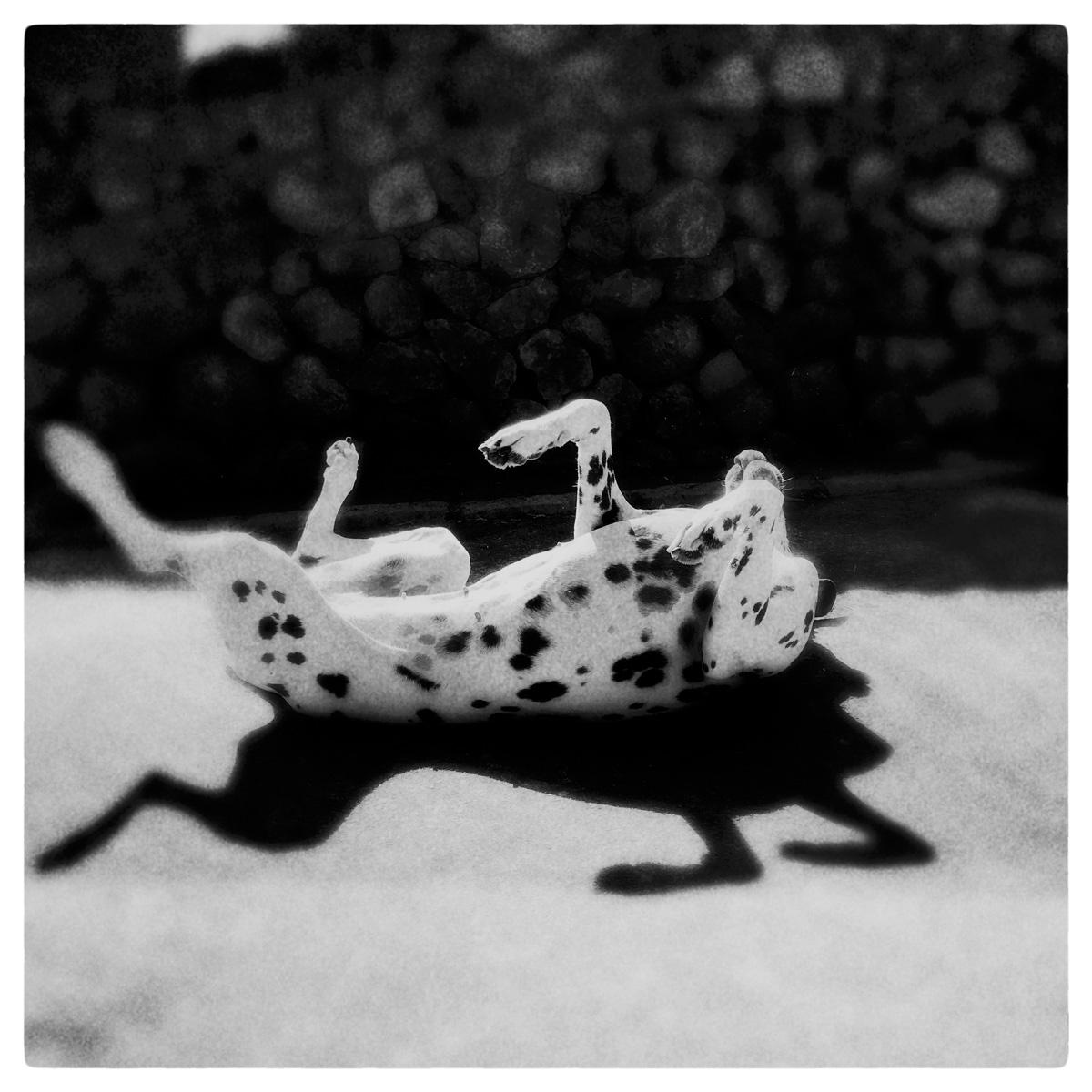 ©  LET'S DANCE  by DELAFOI
