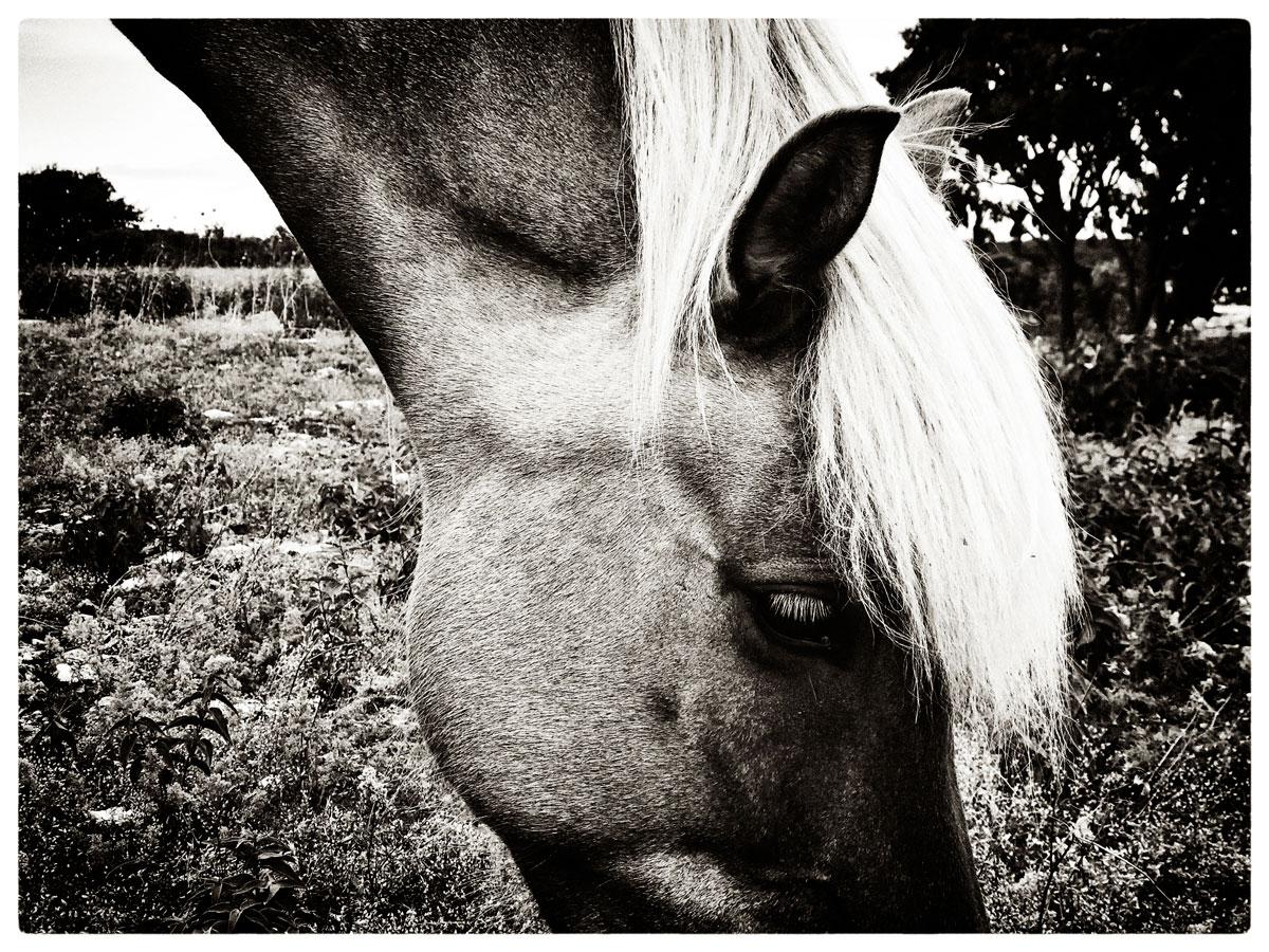01_horse_talk_silver_lowres.jpg