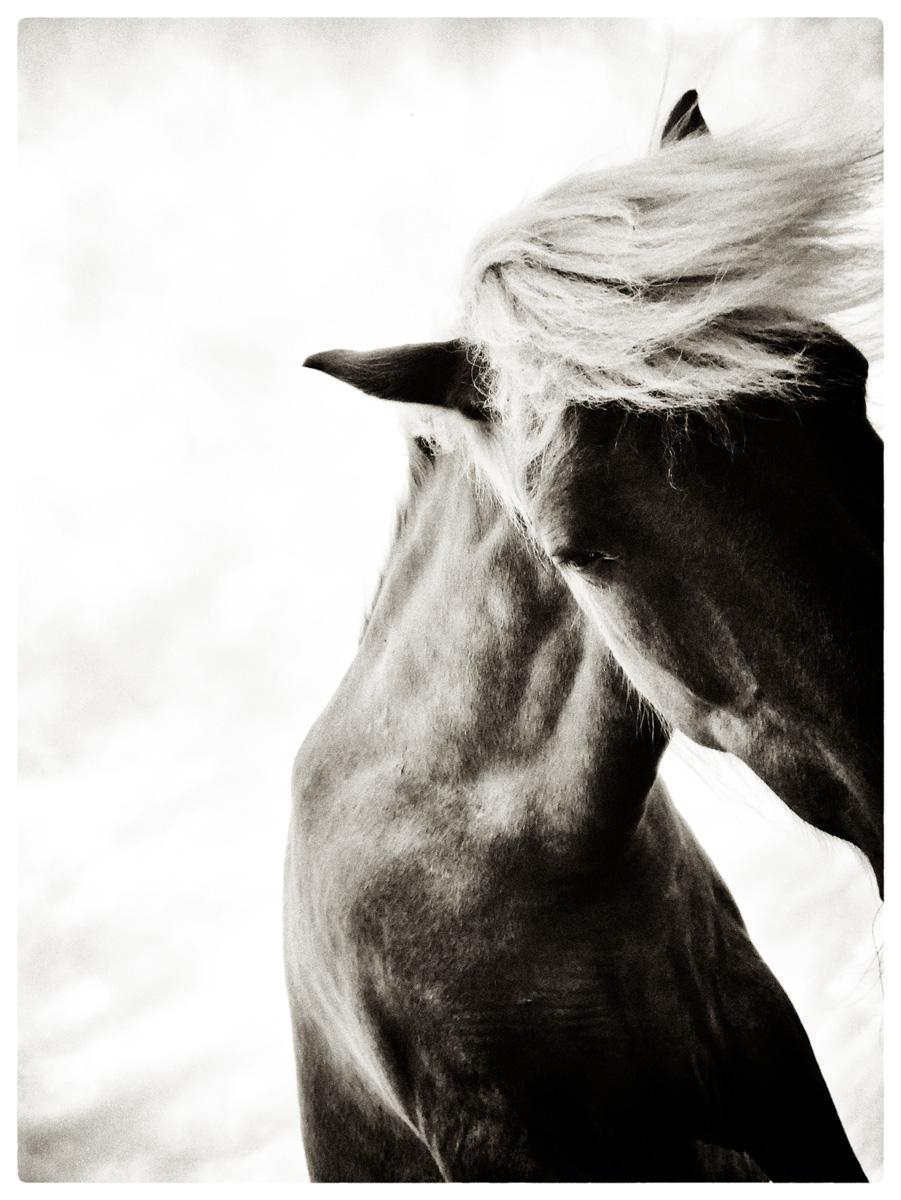 04_horse_talk_silver_lowres.jpg