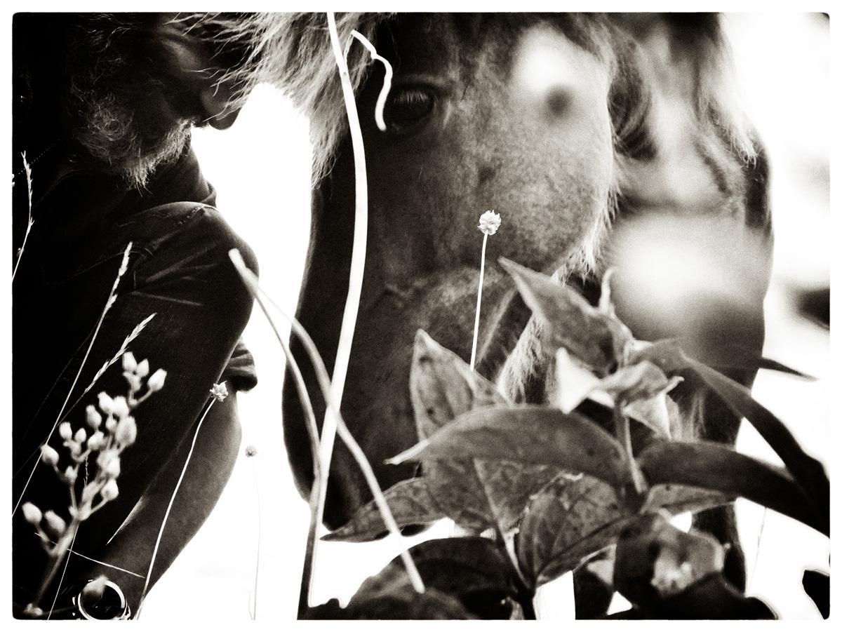 05_horse_talk_silver_lowres.jpg