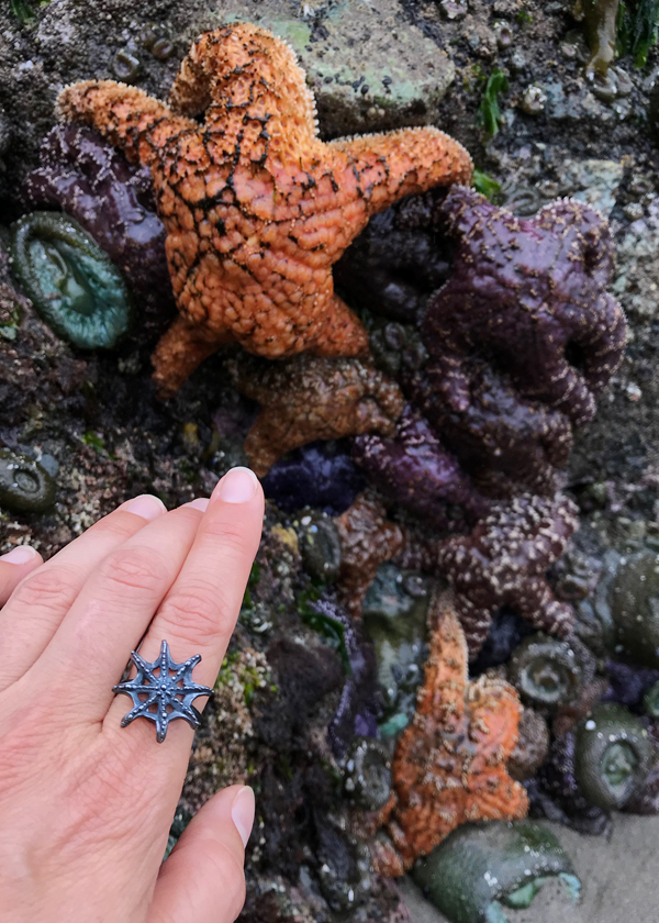 orange and purple starfish on Washington coast beach meet my black silver Sea Star ring