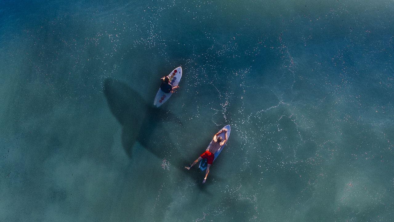 sharks-and-surfing-isla-surf-school.jpg