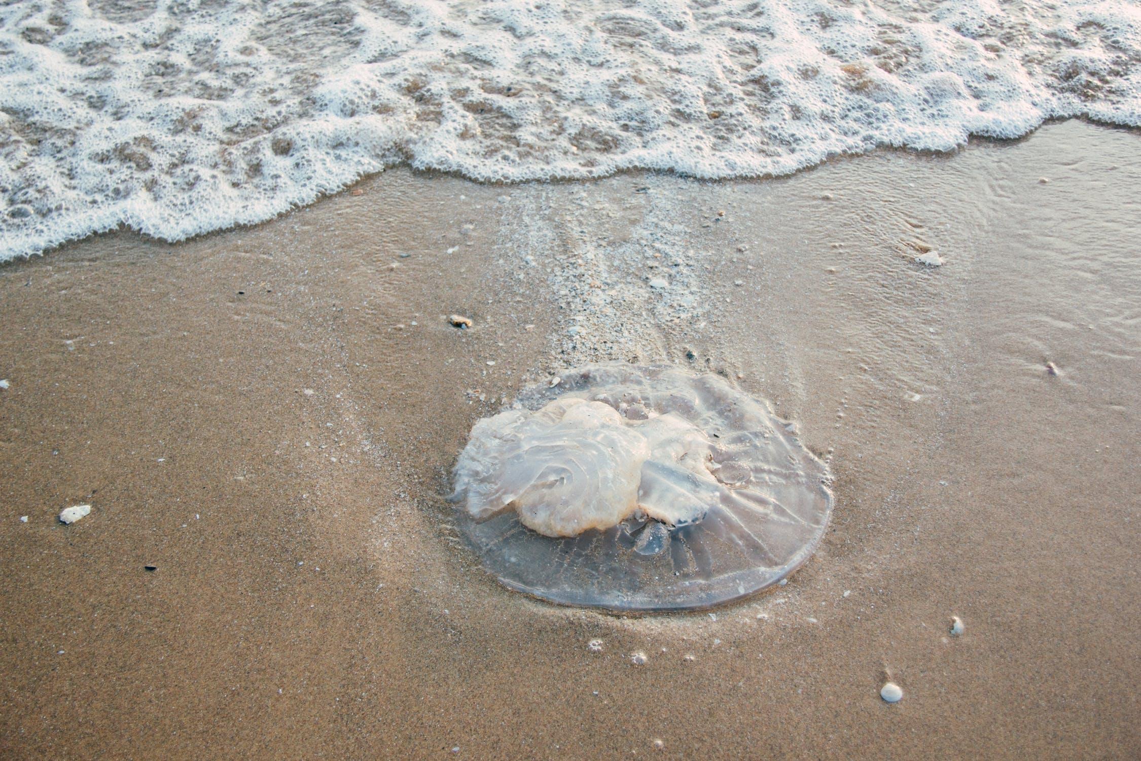 what-to-do-jellyfish-sting.jpeg