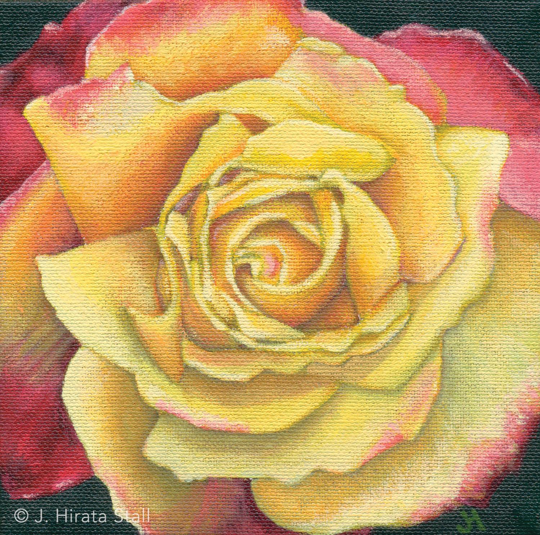 rose-1500.jpg