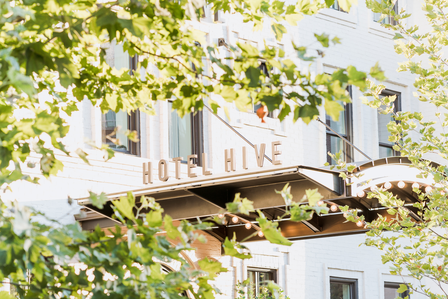Hotel Hive, in Foggy Bottom, Washington, DC. All photographs in this section were photographed for  Hotel Hive .