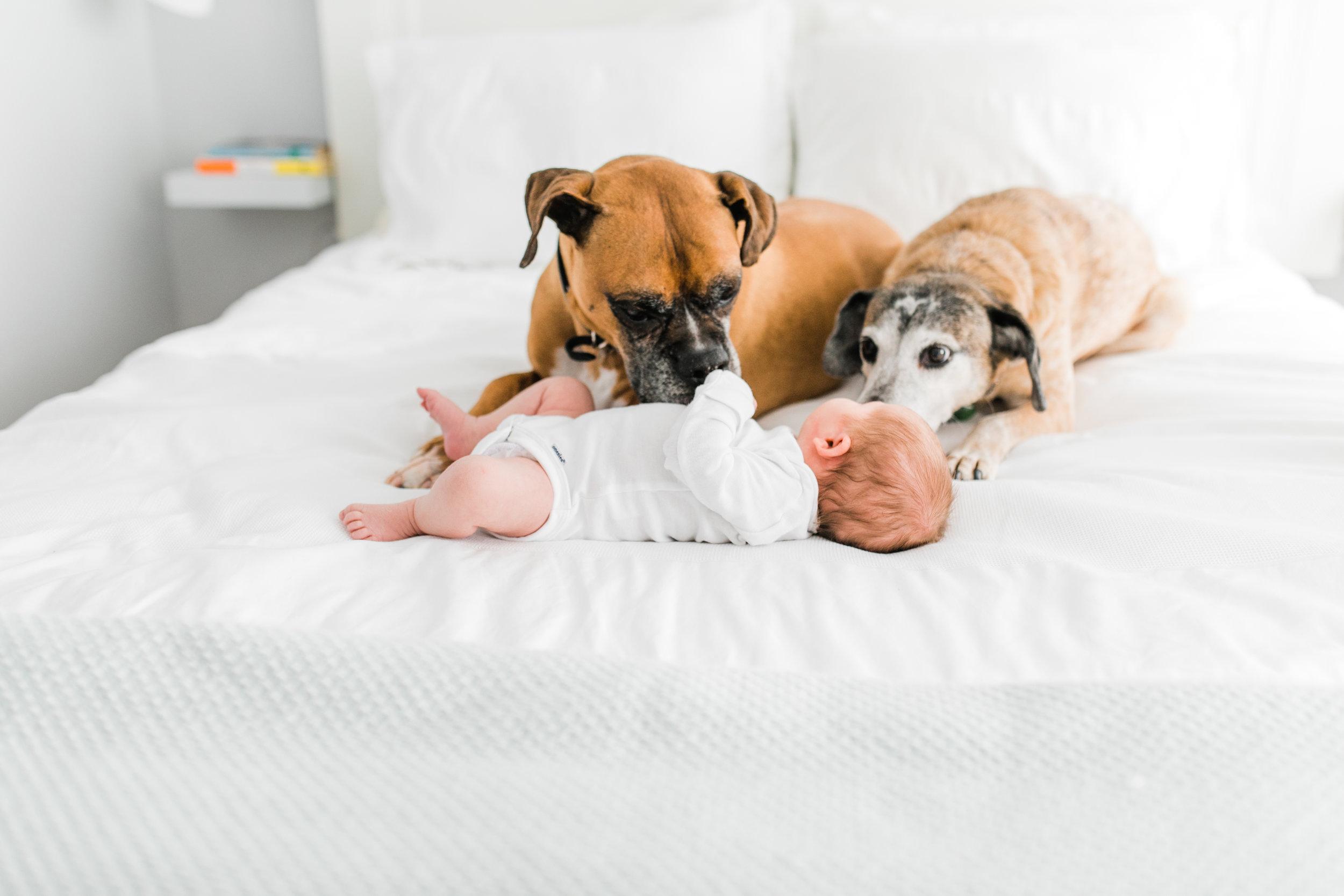 vanessa wyler pewaukee newborn photographer