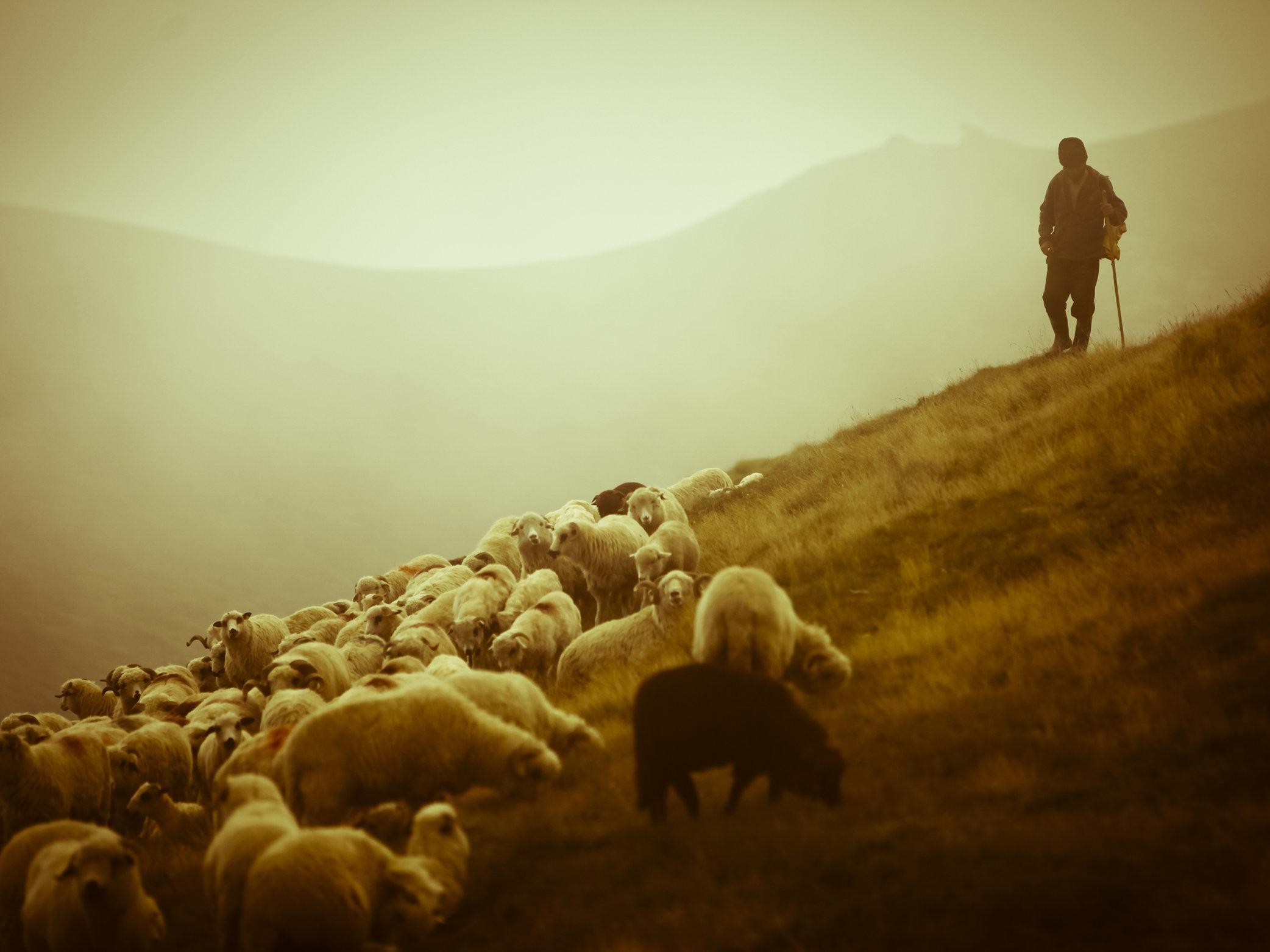 the-Lord-is-my-Shepherd.jpg