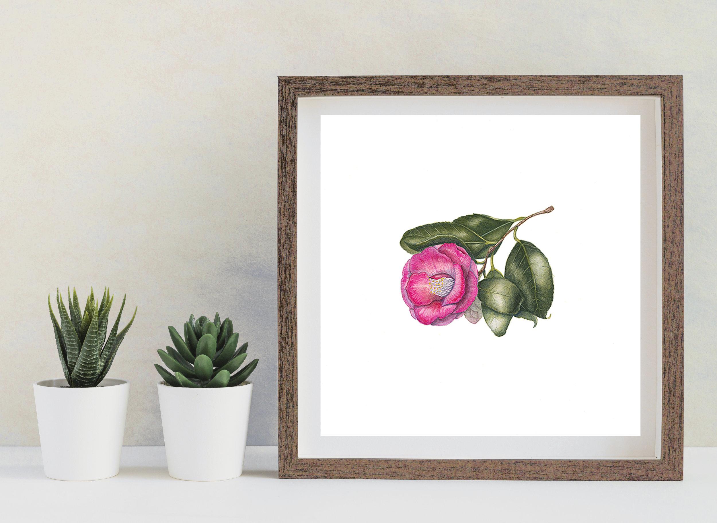 Hot Pink Camellia, 29 x 29cm