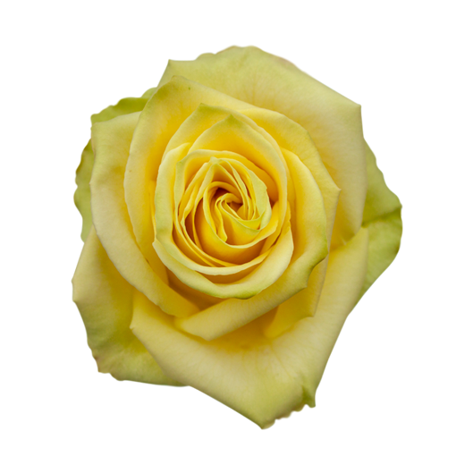 Mint ®   Variedades - IRB