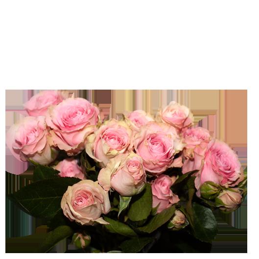pink-iricksa.png