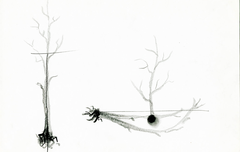 grafito sobre papel (2).jpg