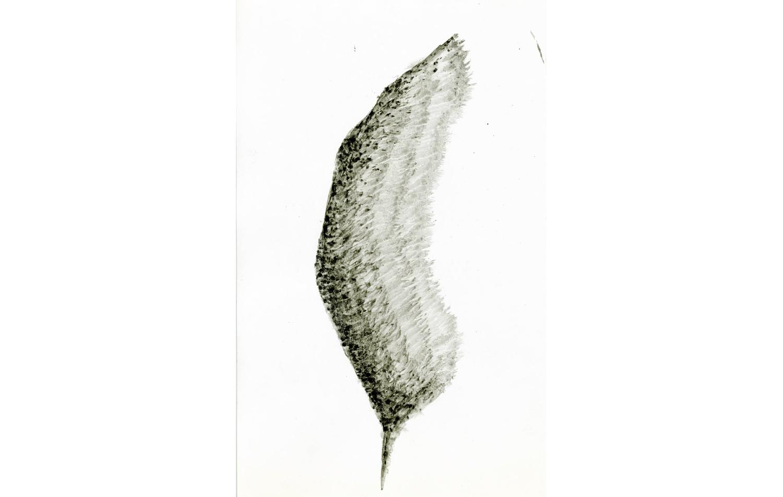 tintas chinas plumas (4).jpg
