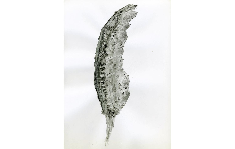 tintas chinas plumas (9).jpg
