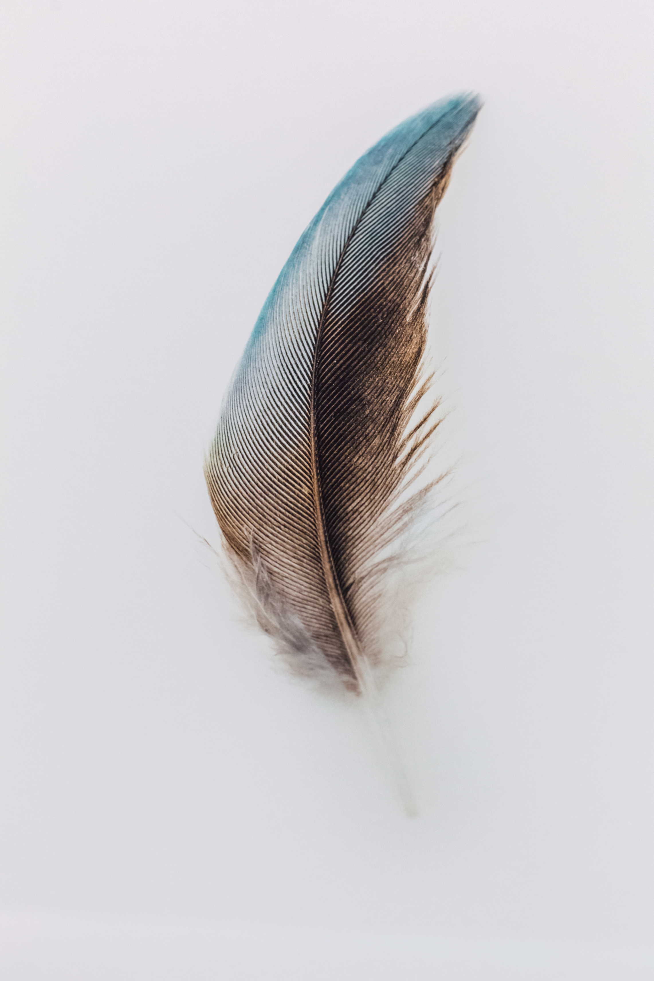 A Feather Studies Image for Tiffany & Co. Sydney by Jared Fowler.  Image Credit: Jodie Barker.