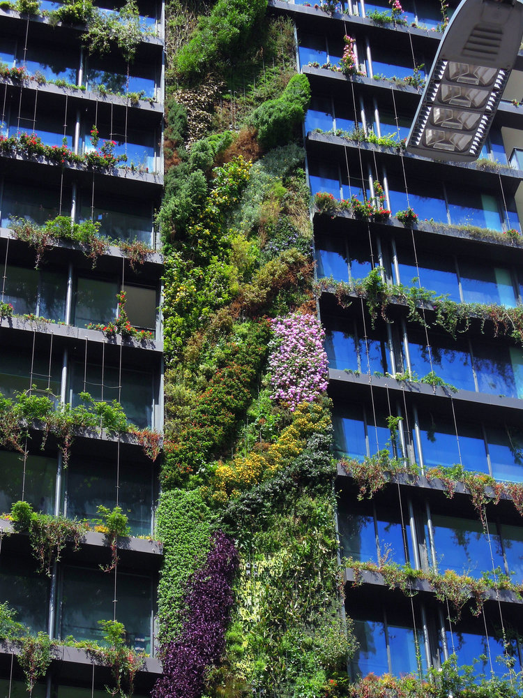Patrick Blanc's incredible vertical hanging garden. Image Credit:    Patrick Blanc