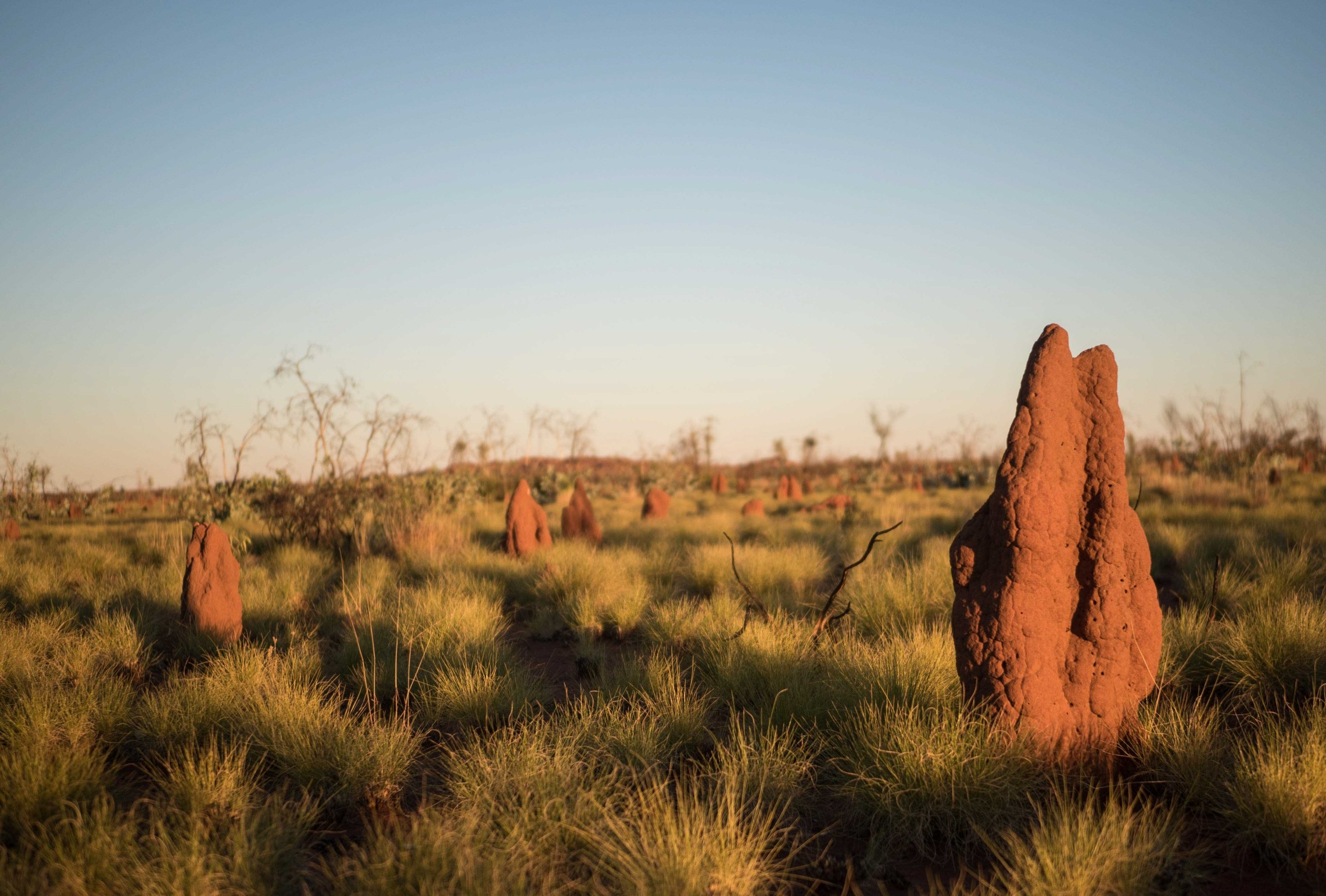 The Tanami Desert in Australia's Northern Territory. Credit: Ben Nichols @rockpoolphotography.