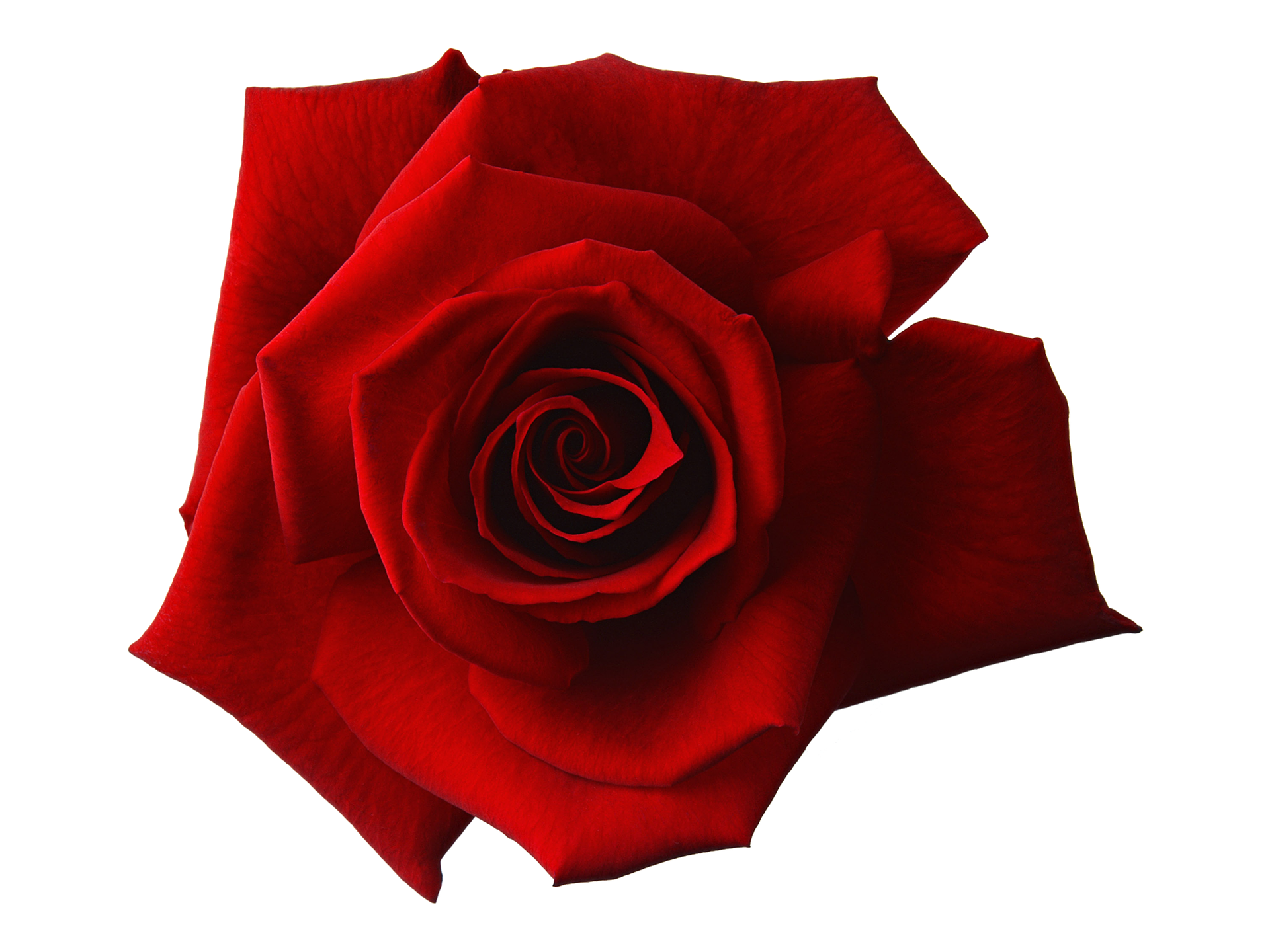 red-1649142_1920.png