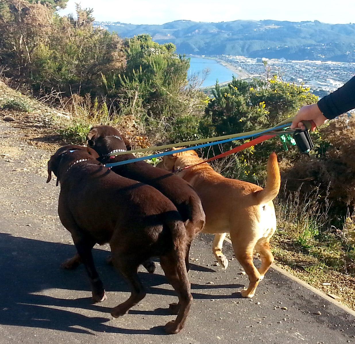 Dogs_going.jpg