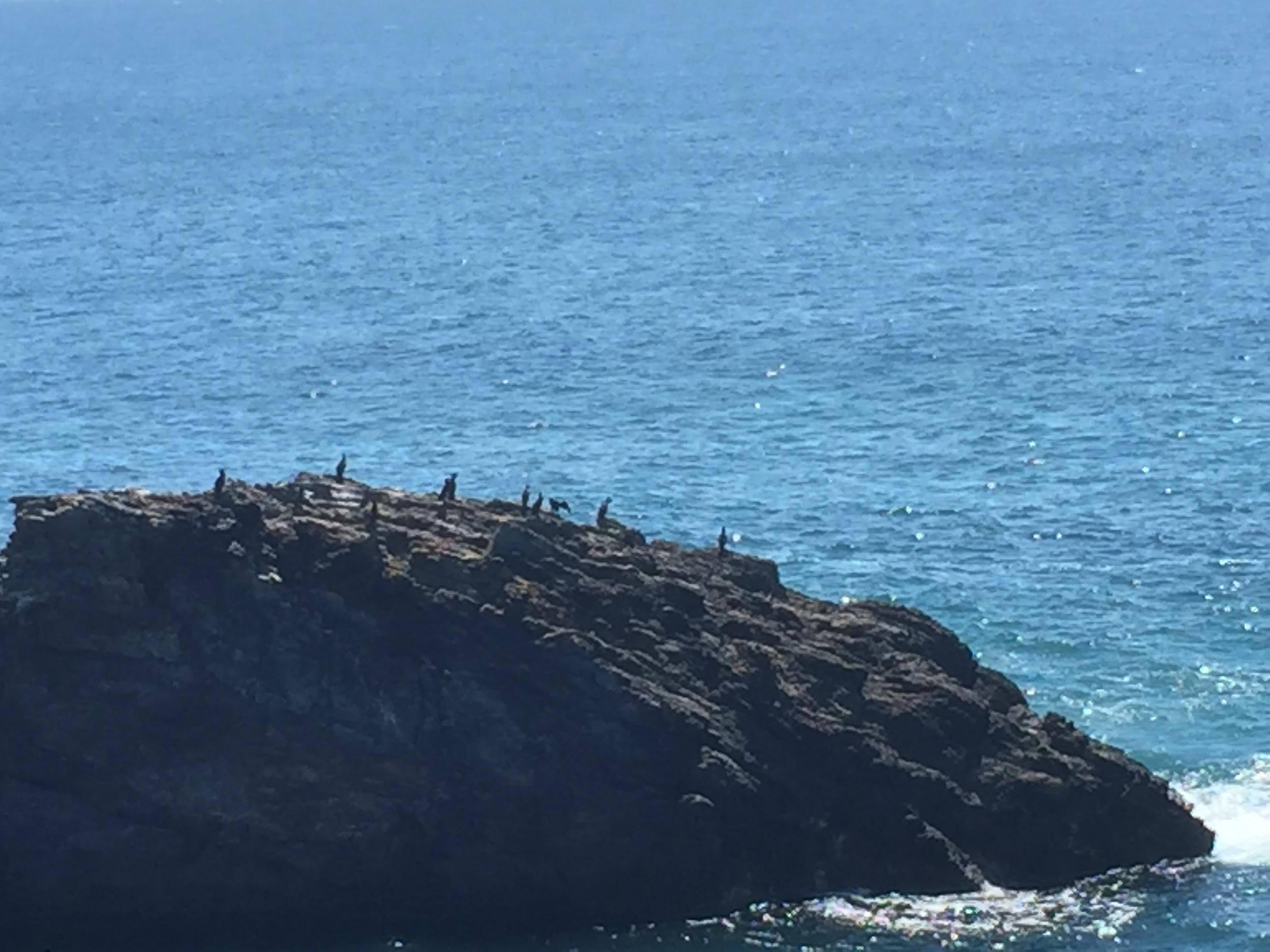 Mystery Bay Birds.JPG