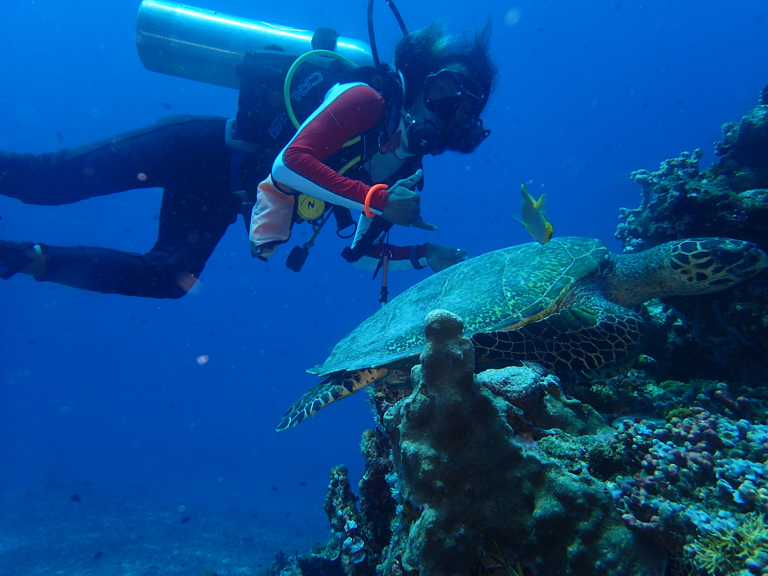 Local Dive Master Soni with one of our local turtles on Hans Reef