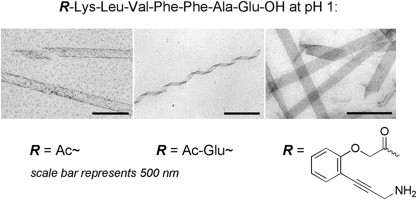 Tune your tube: the aggregation morphology of the A  β  (16–22) sequence is strongly dependent on the overall charge of the peptide and can be tuned by variations of the  N  -terminal capping moiety in combination with the pH.