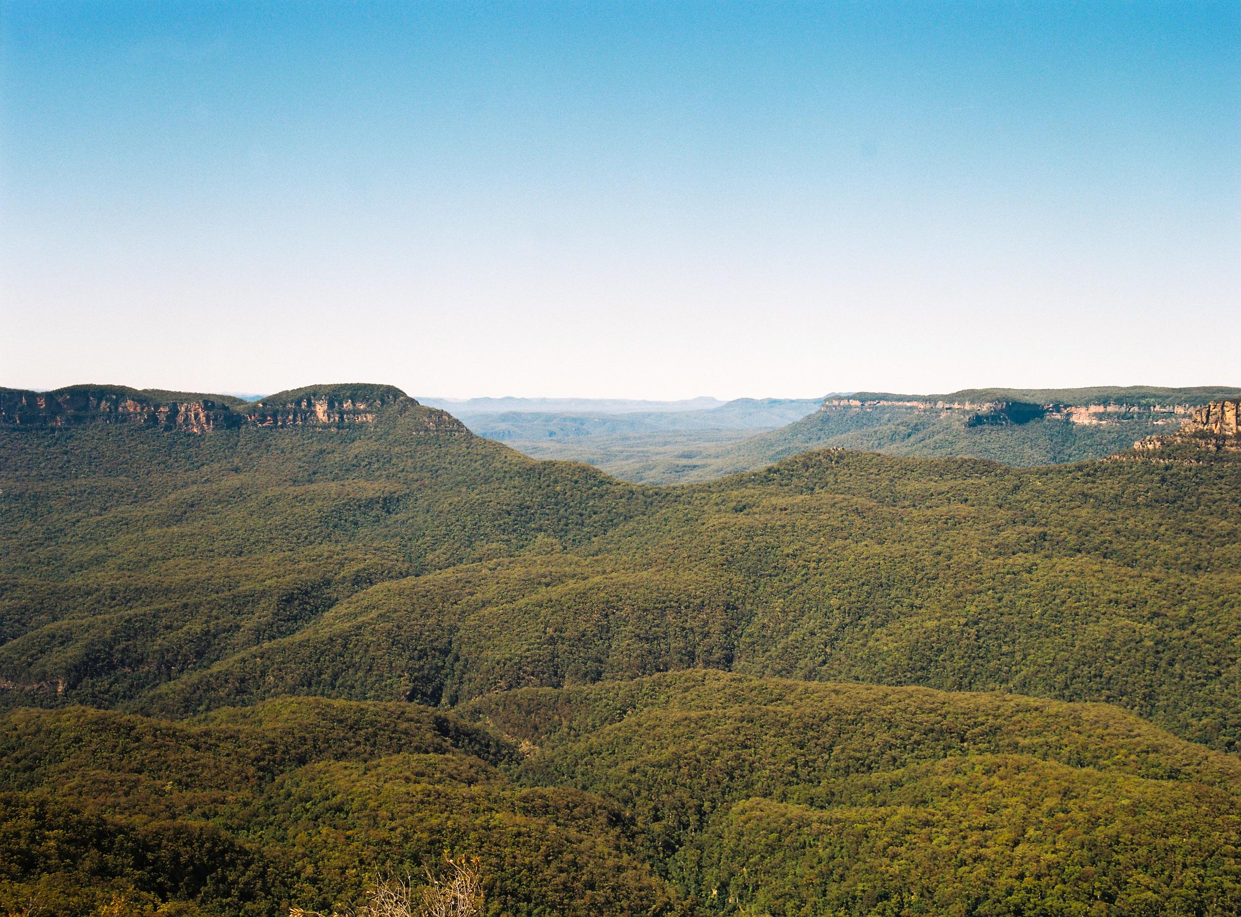 Blue mountains eucalyptus