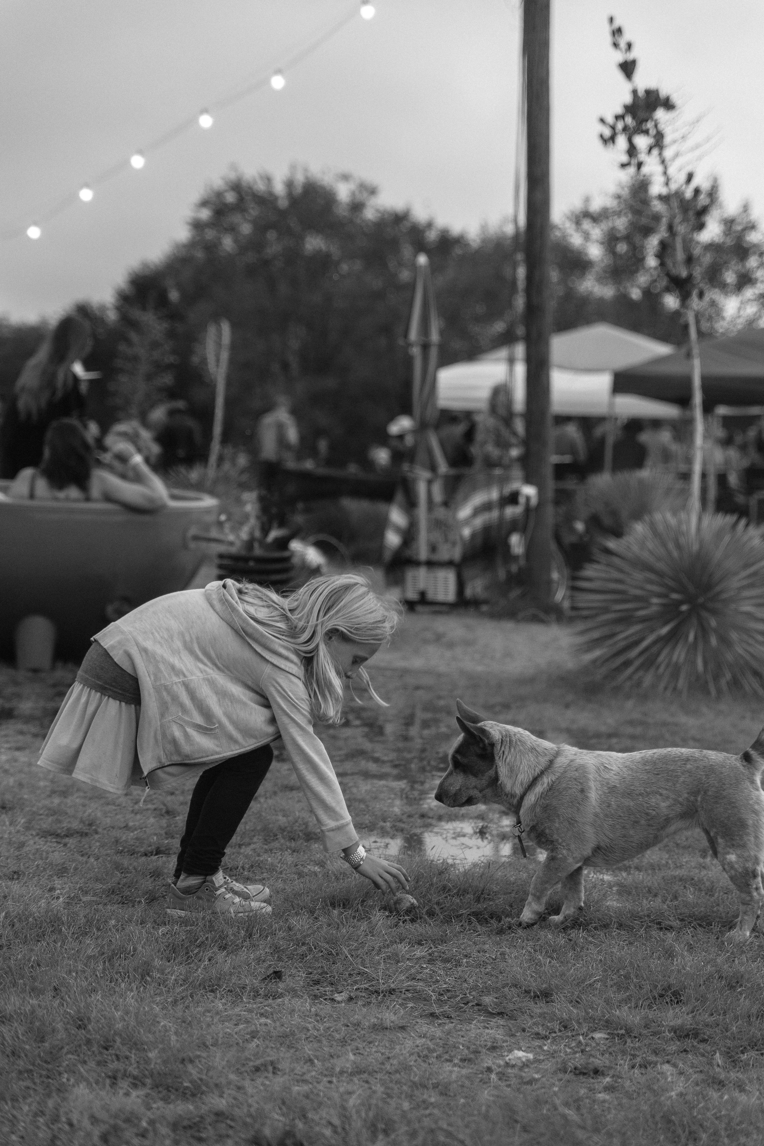 dogs-16.jpg