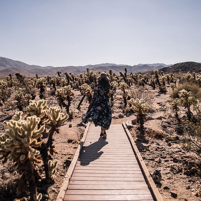 At times the most consciously chosen, seemingly beautiful path can lead you to a field of very scary cacti 🌵🐲 that are capable of hurling moderately-sized, thorn covered cactus-balls towards you (while you are clad in an Instagram photo dress instead of cactus battle attire 😂). We at BKE have been fortunate for these thorny experiences, both in life and for our growing small business. We have learned that it's important to remember that sometimes the universe ISN'T telling you to re-explore your instincts and values that brought you to this place.  It's actually just being the universe- and teaching you through the inevitably dynamic cycles of life. And instead of altering course, it's time to put on some close-toed shoes & a leather coat, take a deep, brave breath & grab a pair of tweezers for any cactus needles encountered on the ride. ✨One (careful) step in front of the other to the horizon on the other side. (Note: I may be still picking cactus needles out of that dress both metaphorically and quite literally)