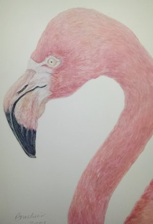 Fur & Feather Techniques of Animal Illustration.jpg