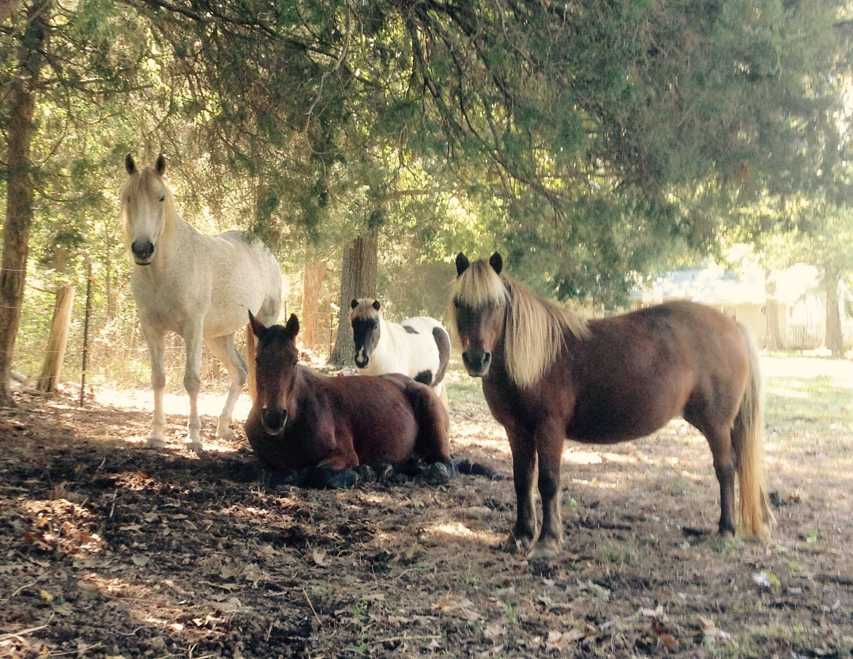 #notmyhorse None of my horses will die in a slaughter house or experience neglect during their lives. Eventually, each of them will take their final resting place here, beneath a shady tree in our pasture.