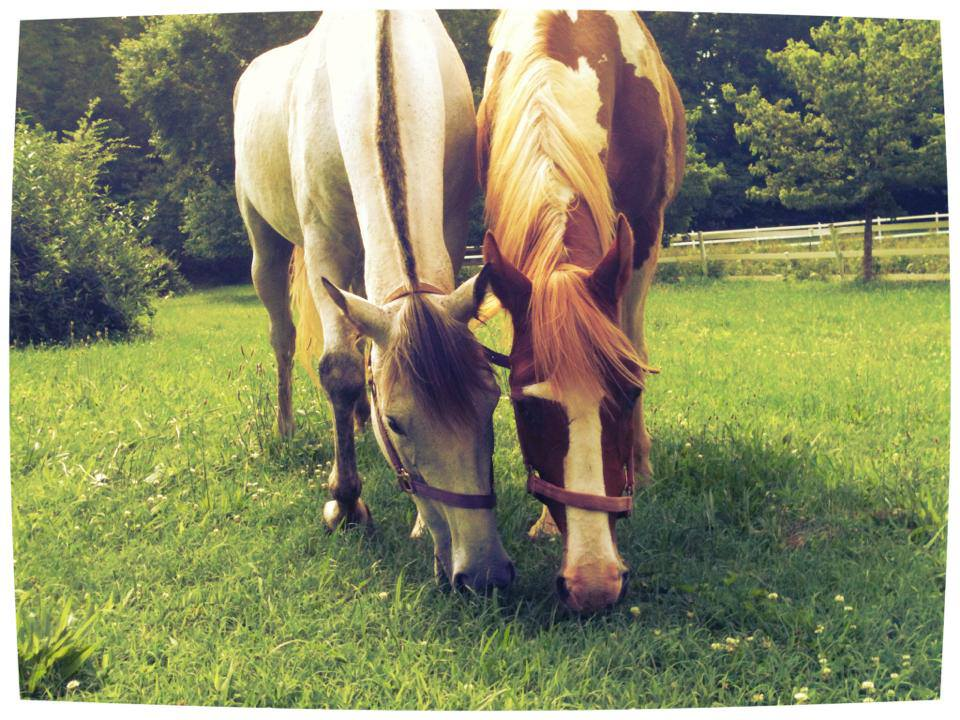 In a field of many acres, these two would often be nose-to-nose.
