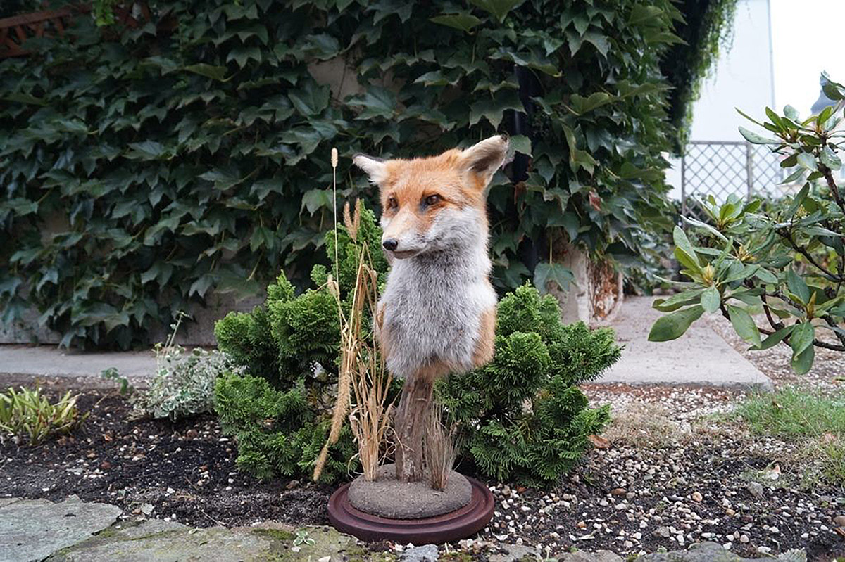 Robin-Butter-after-all-i-still-want-a-fox-taxidermy-internet-ebay-digital-dumpster-dive-dear-mounted