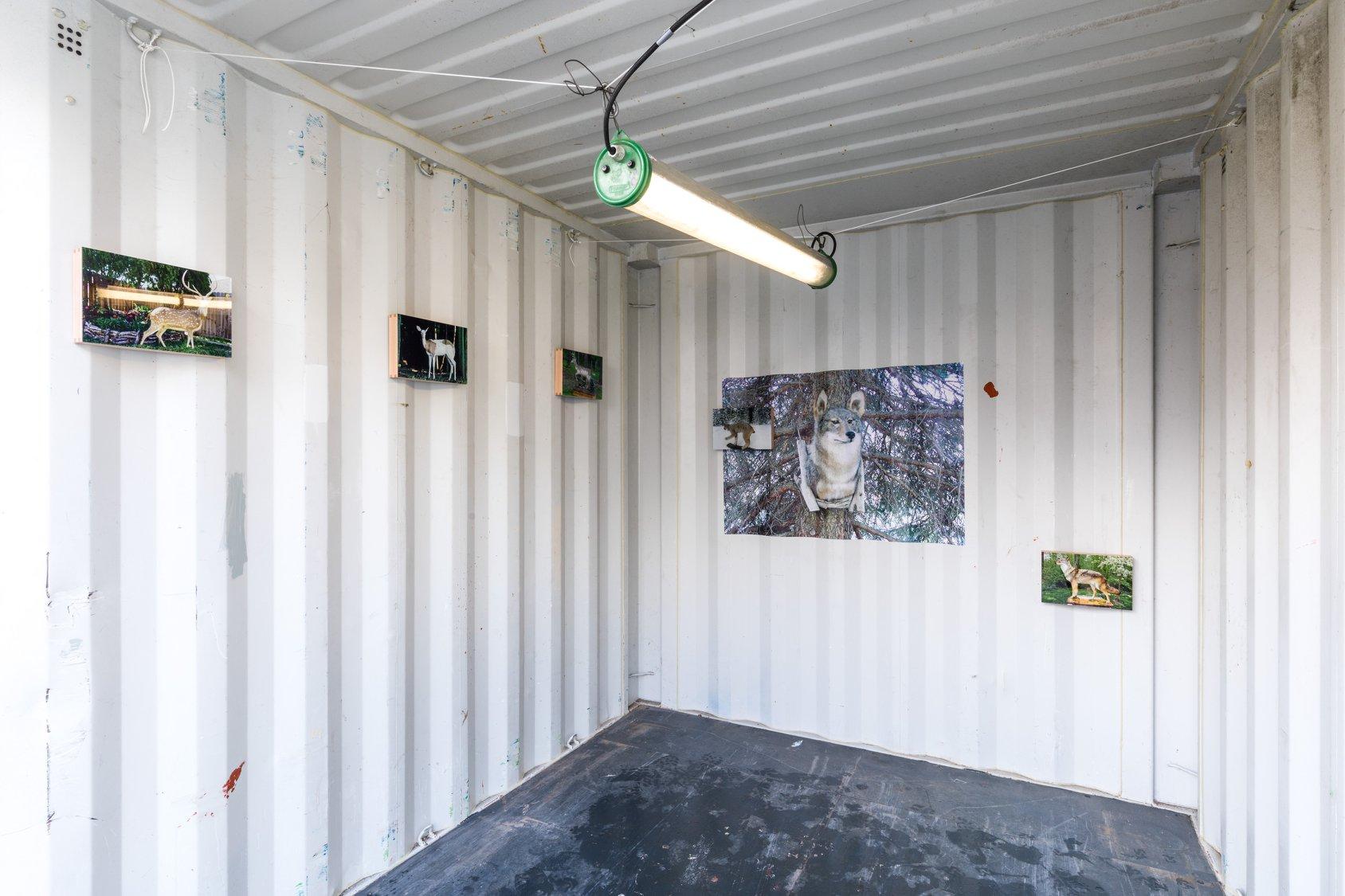 Robin Butter Rotterdam Photo Festival 2018 After All I Still Want A Fox