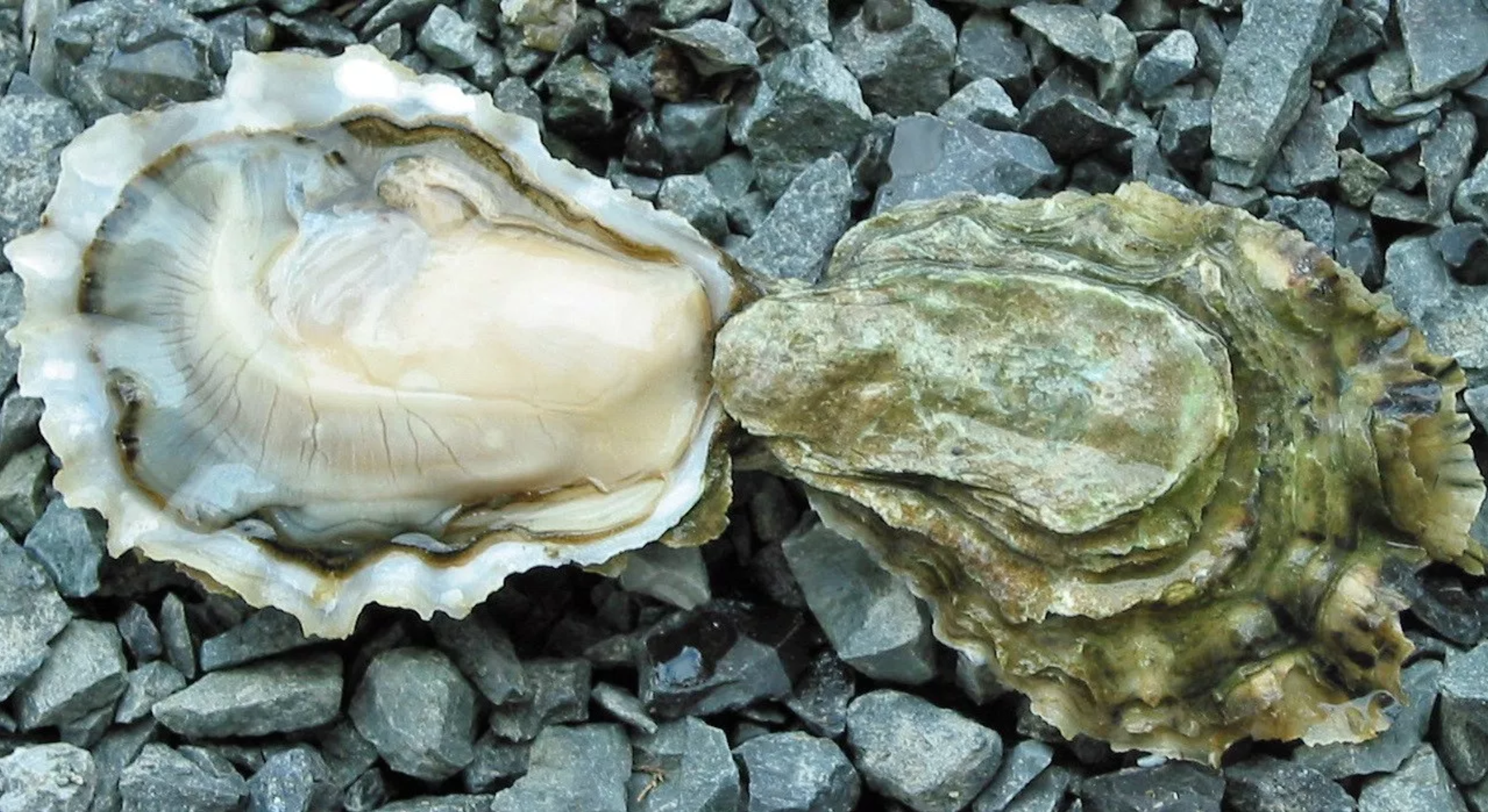 Oysters - My favorite! Oysters are loaded with zinc (elevates Testosterone and HGH/human growth hormone) to help enhance your physical performance in the bedroom.