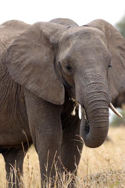 elephant eat.jpg