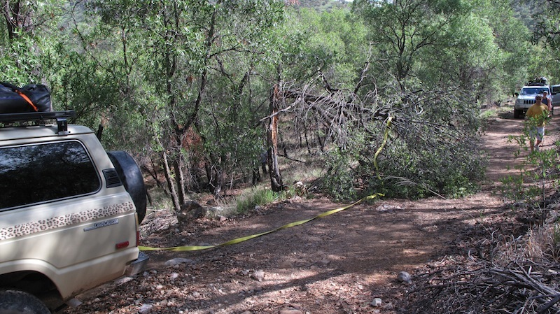 trail clearing after the storm.jpg