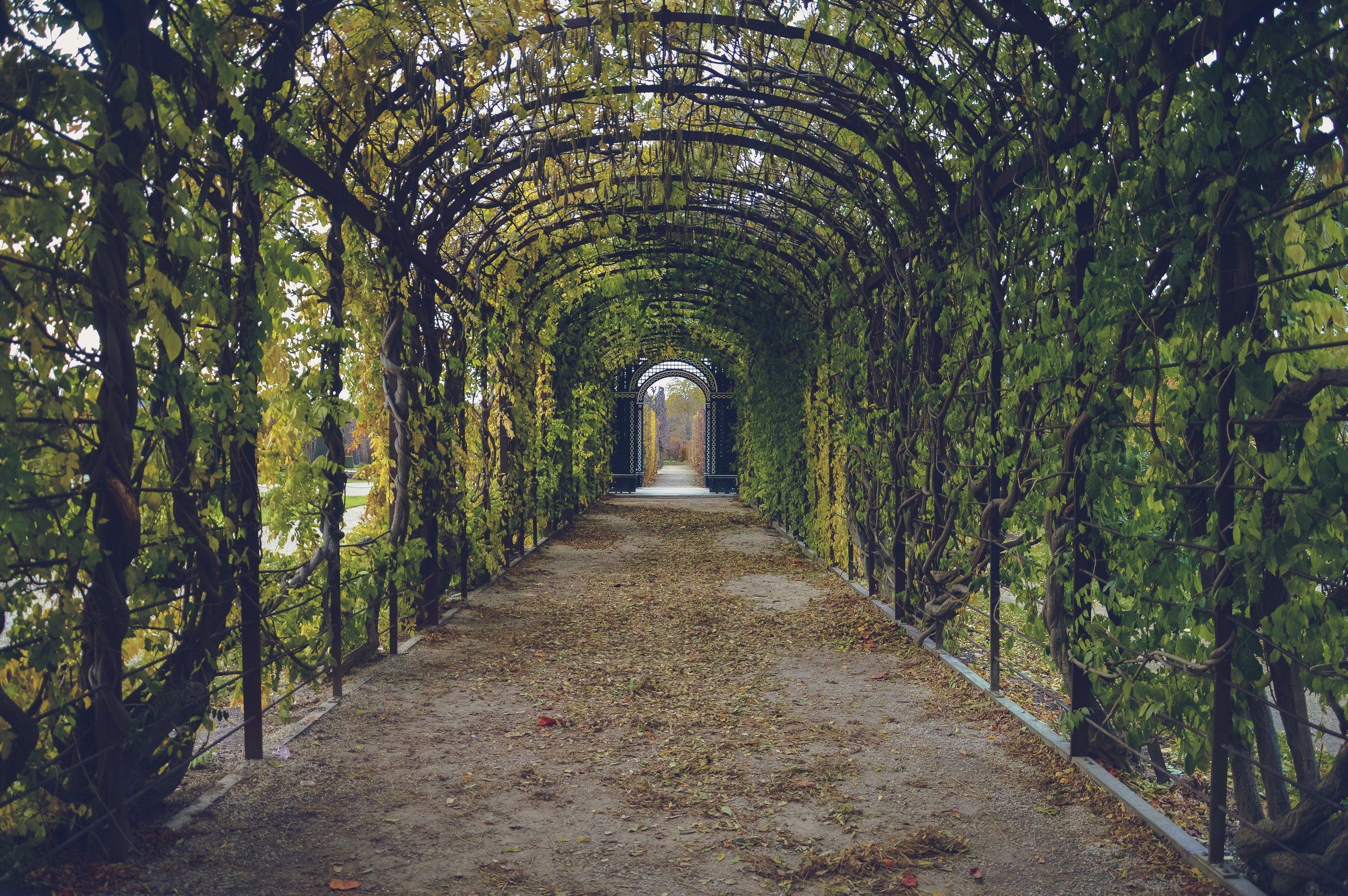 bindweed-corridor-foliage-59599.jpg