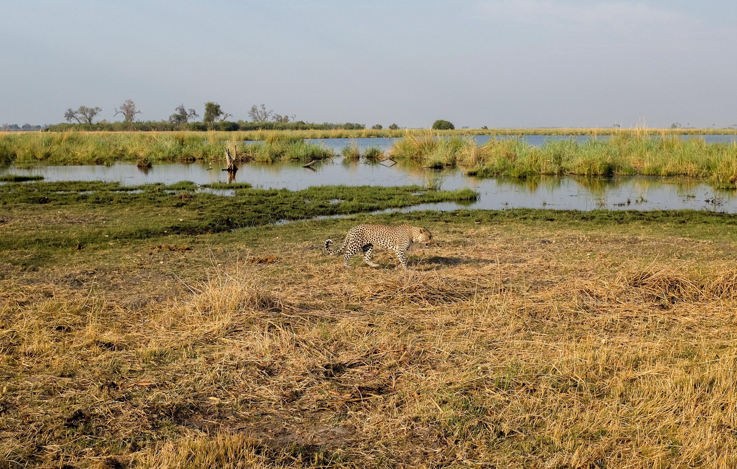 Linyanti Concession / Botswana