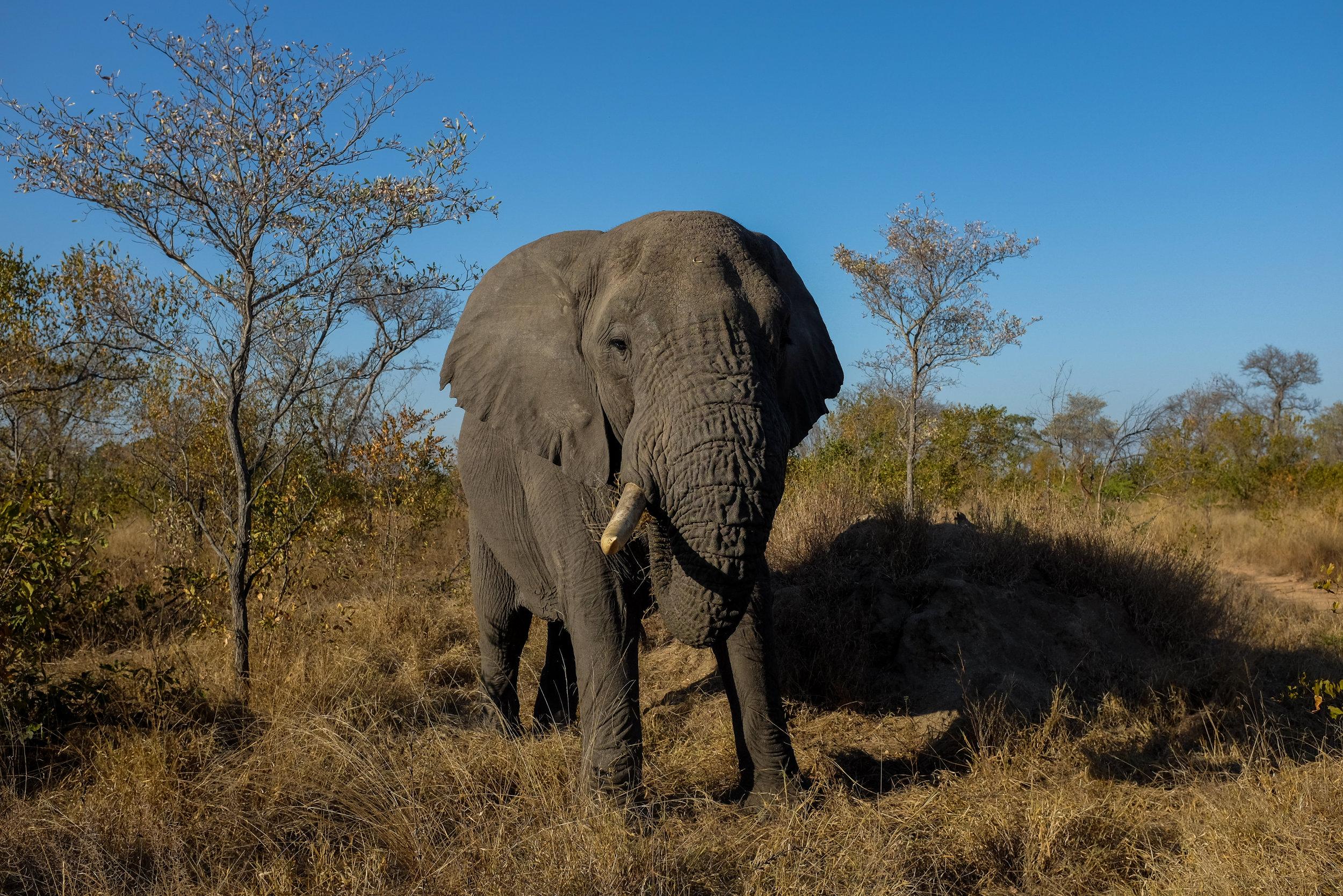 Sabi Sabi Game Reserve / South Africa