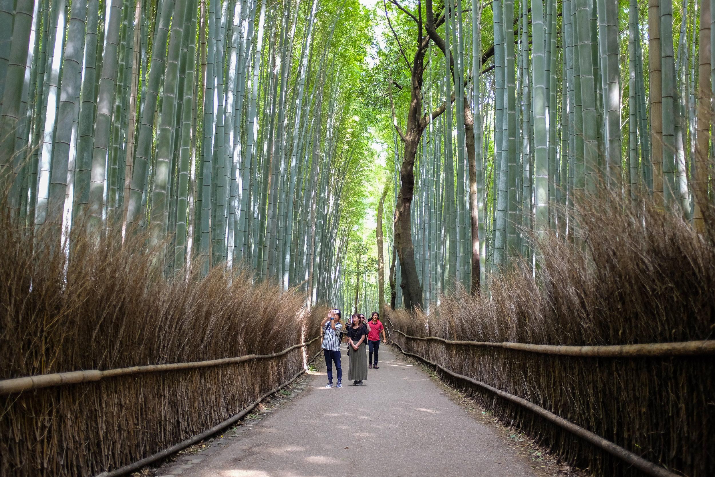 Arashiyama Bamboo Grove / Kyoto / Japan