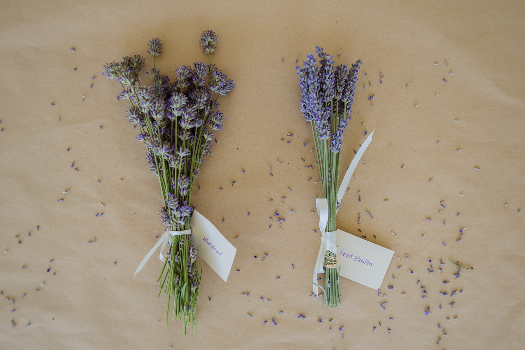 English And French Lavender