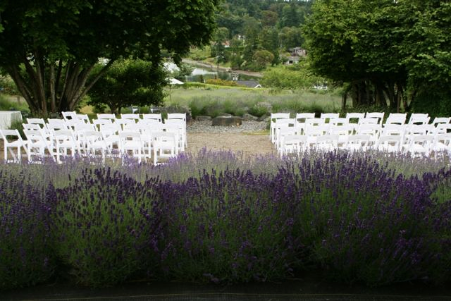 Chairs facing the lavender field